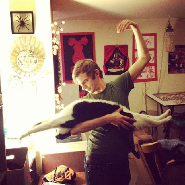 Gato bailarín