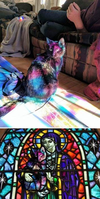 gato vitrina