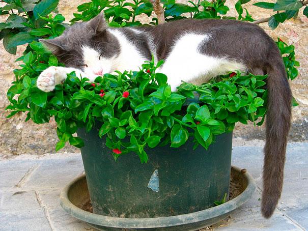 gato dormido en planta