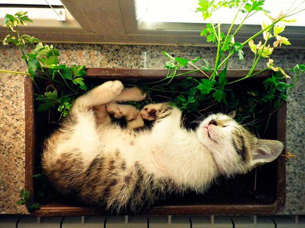 gato dormido en jardinera
