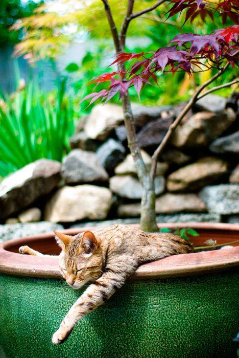 mini gatito en plantita