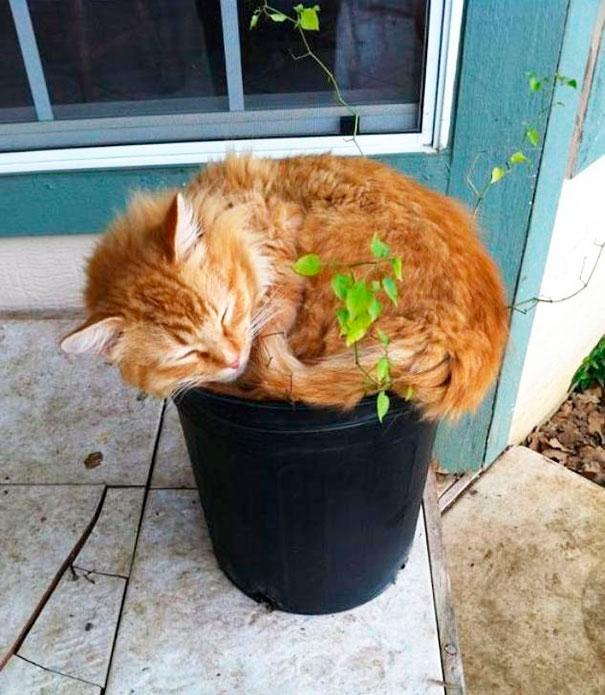 gato aplastando planta