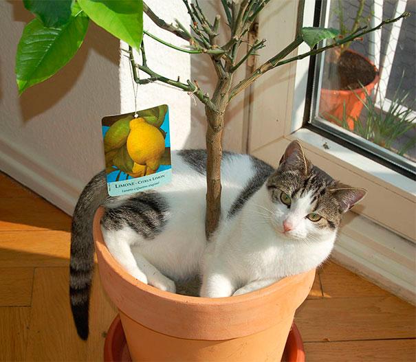 gato tomando el sol en planta