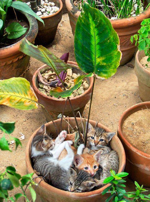 tres gatitos en planta