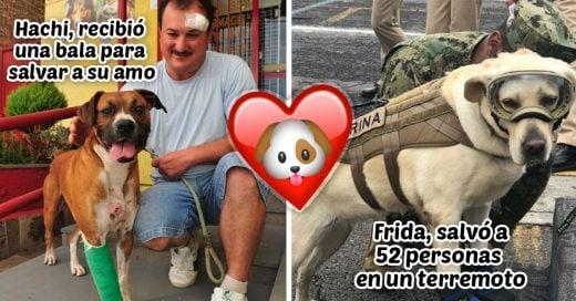 Cover Perros heróicos que deberían develar su placa en el FBI