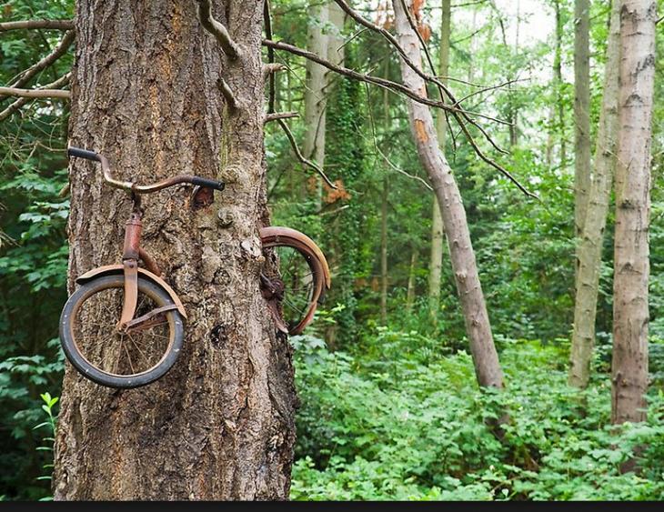 pasiaje con arbol y bicicleta