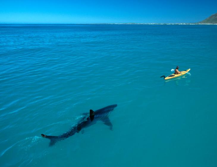 tiburon en el mar