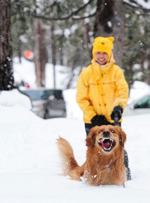 perro feliz en la nieve