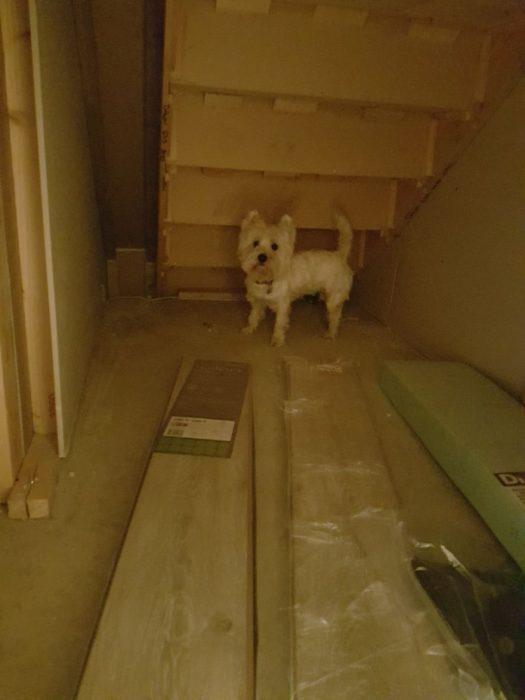 perrita en cuarto abajo escaleras