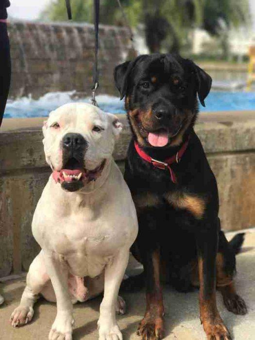 perro blanco y perro negro