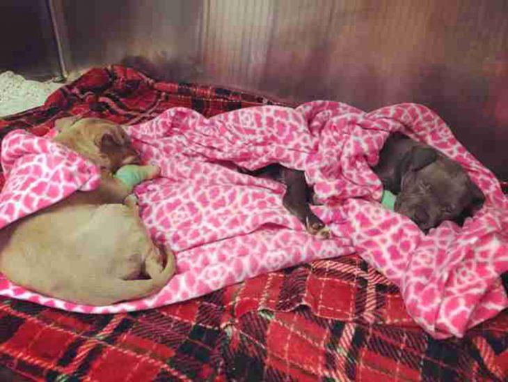 Cachorritos en una mantita