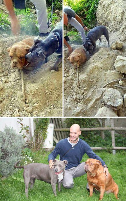 perritos héroes