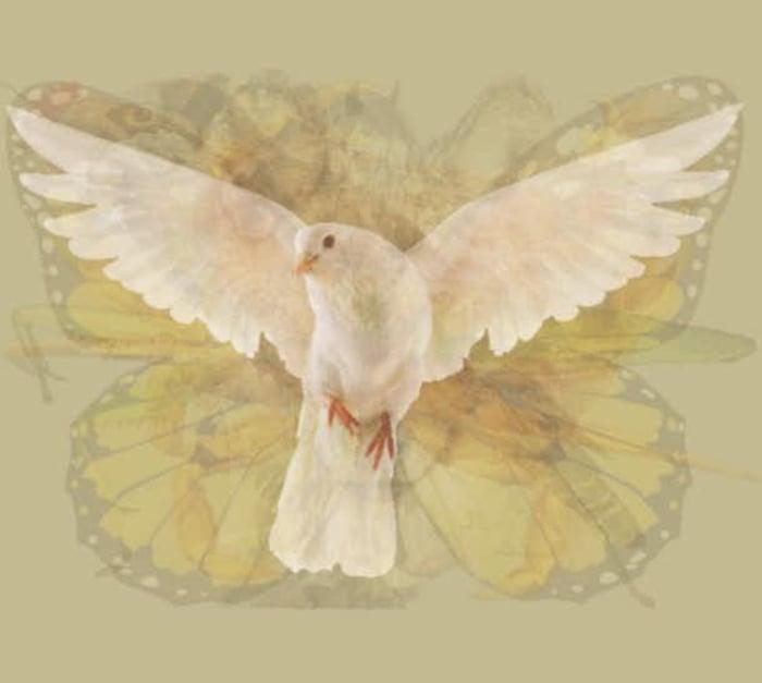 Quéanimalves paloma