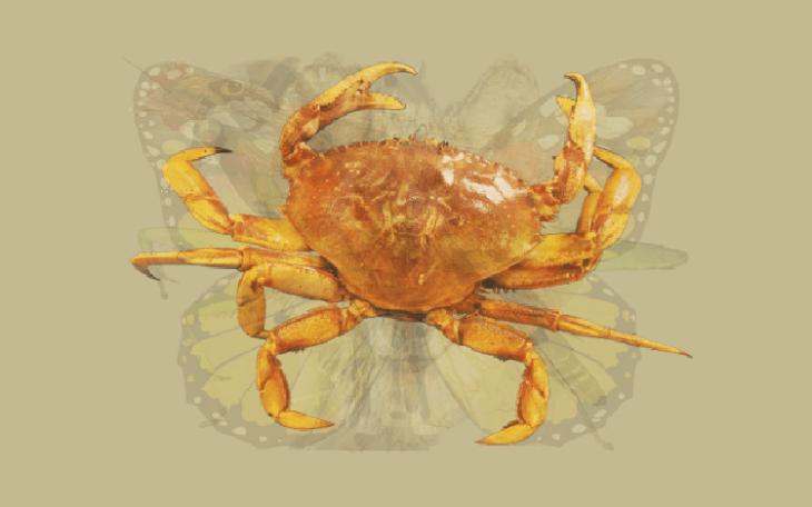Quéanimalves cangrejo