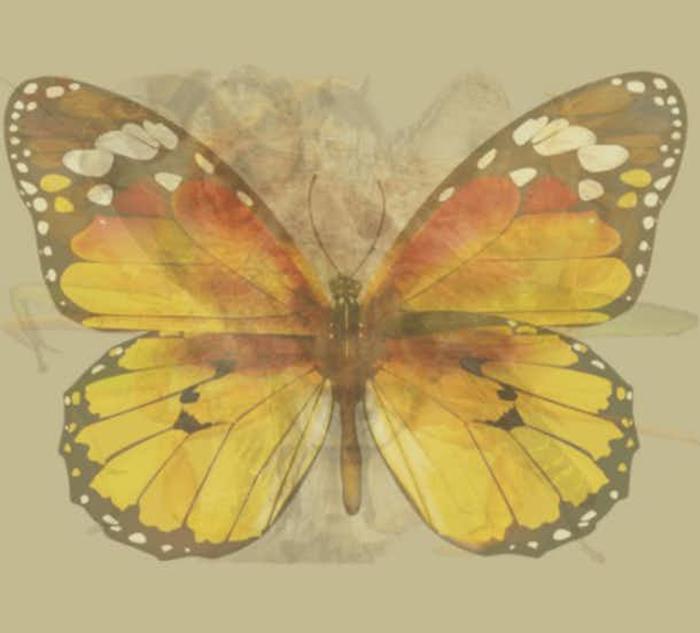 Quéanimalves mariposa