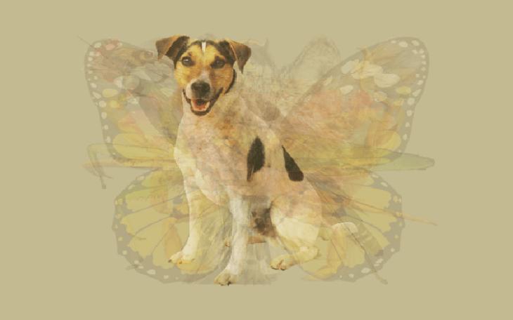 Quéanimalves perro