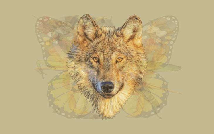 Quéanimalves lobo