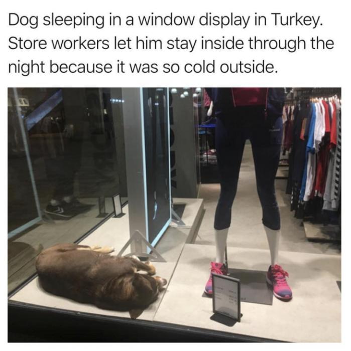 perro tienda