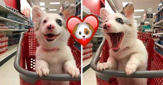Cover A las mascotas también les gusta ir de compras; mira lo feliz que lucen en Target