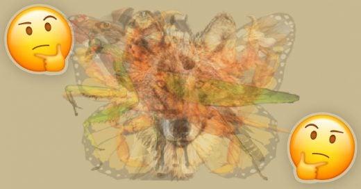 Cover El primer animal que veas en esta imagen determinará tu personalidad