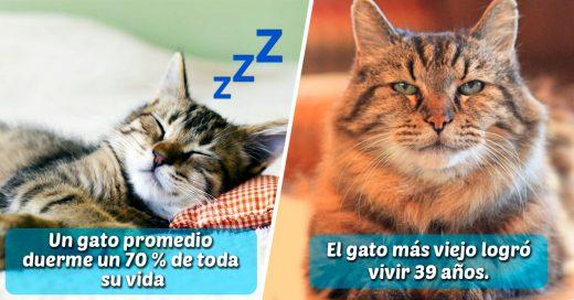 Cover Cosas que no sabías sobre los gatos