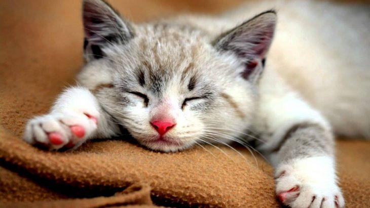 datos de gatos