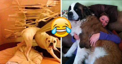 Cover problemas que solo los dueños de perros entenderán