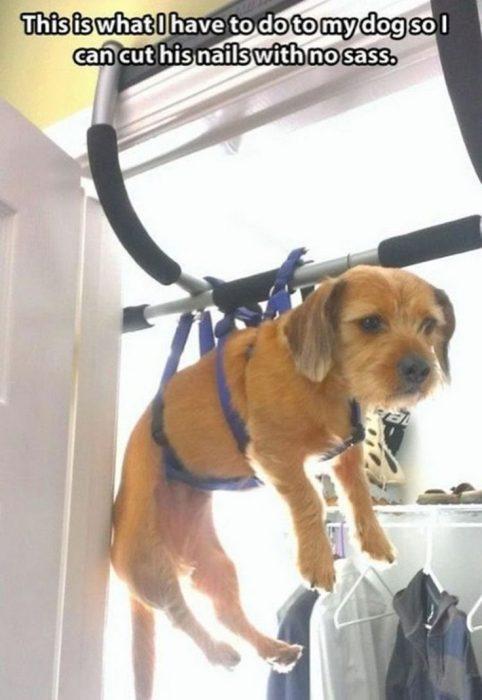Problemas con perros