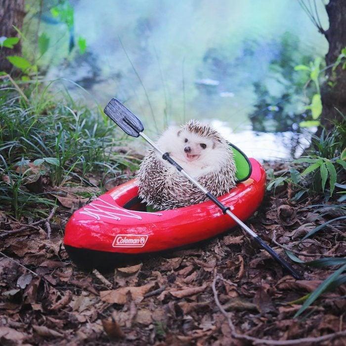 kayak color rojo erizo montado en el