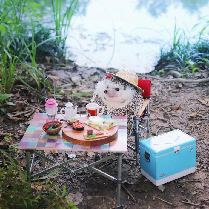 mesa de campo con comida erizo