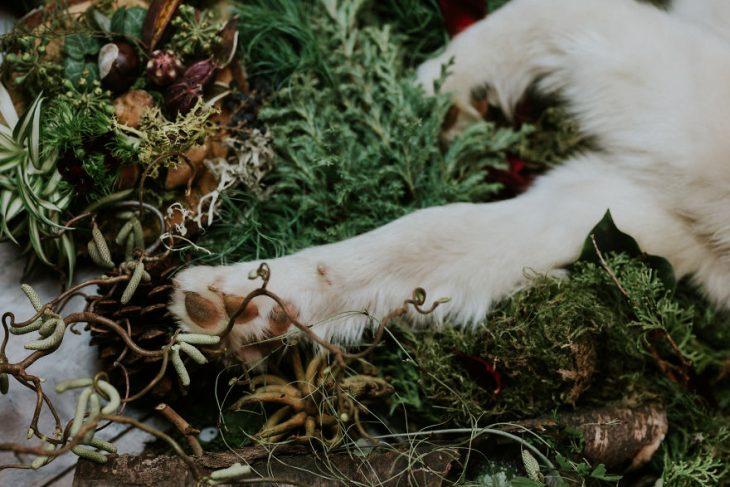 perrito husky enfermo