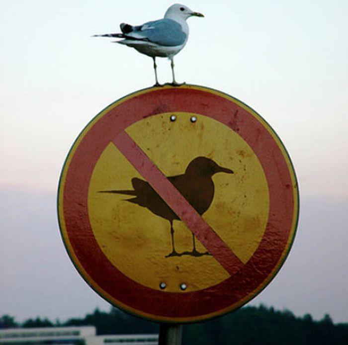 ave sobre letrero