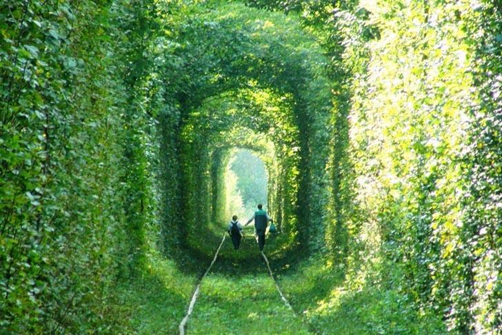 tunel con hierba a su alrededor