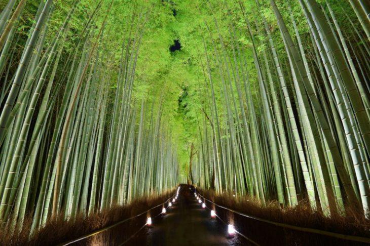 arboles de bambu