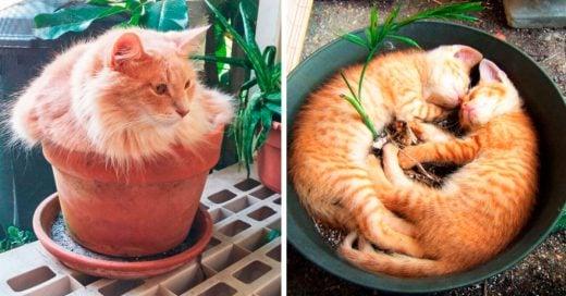 Cover Decora tu jardín con estos adorables GATO-PLANTAS
