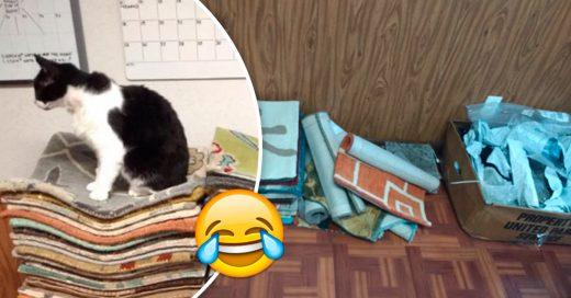Cover Esta mujer creyó haber engañado a Amazon al encargar un montón de muestras de alfombras gratis, pero lo lamentó enseguida