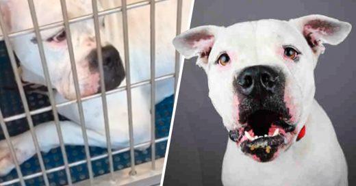 Cover Nadie quería adoptar a este perrito, pero entonces su vida cambio