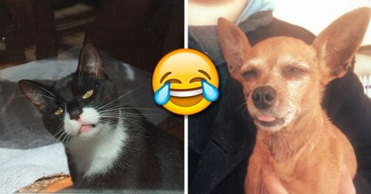 Cover Animales que fueron al veterinario y su cara lo dice todo