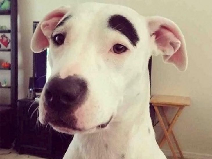 Perrito manchado