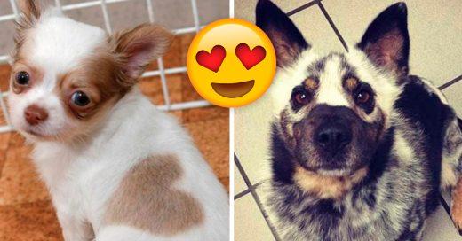Cover perros con el pelaje más sorprendente que has visto