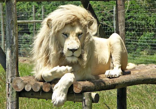león fotogénico