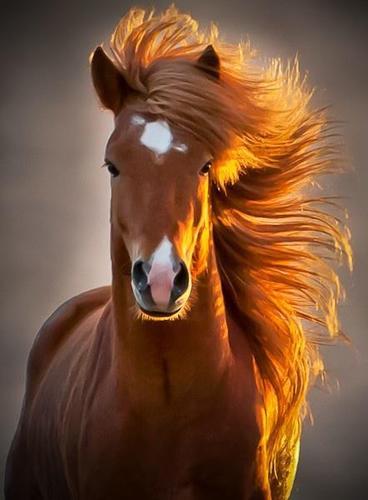 caballo fotogénico