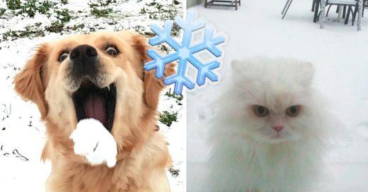 Cover Mascotas que conocieron la nieve por primera vez y aún no saben qué pensar