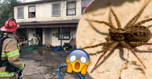 Cover Hombre incendia su departamento tratando de quemar viva una araña