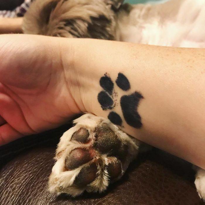 brazo sobre una pata de perro