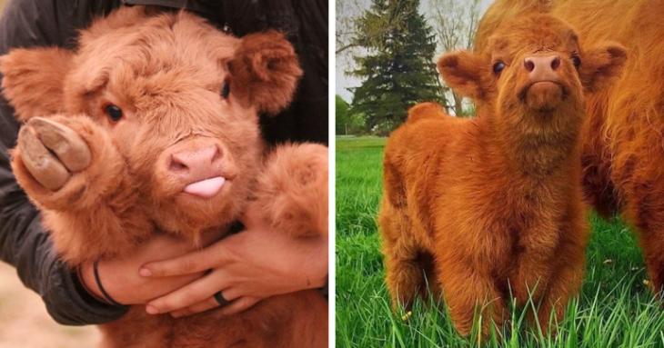 vacas bebes aadorables