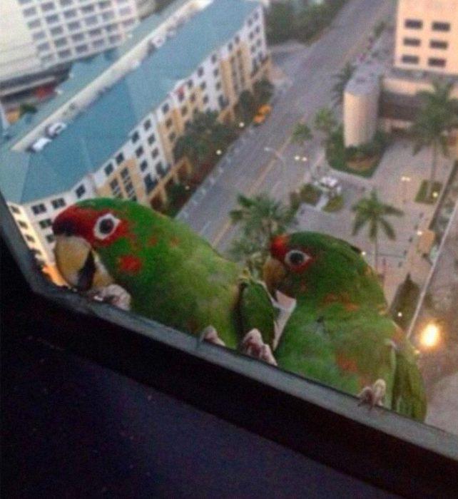 pajaritos que se asoman por la ventana