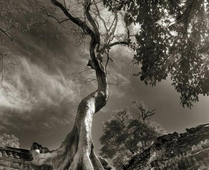 vista baja de pasiaje con árbol