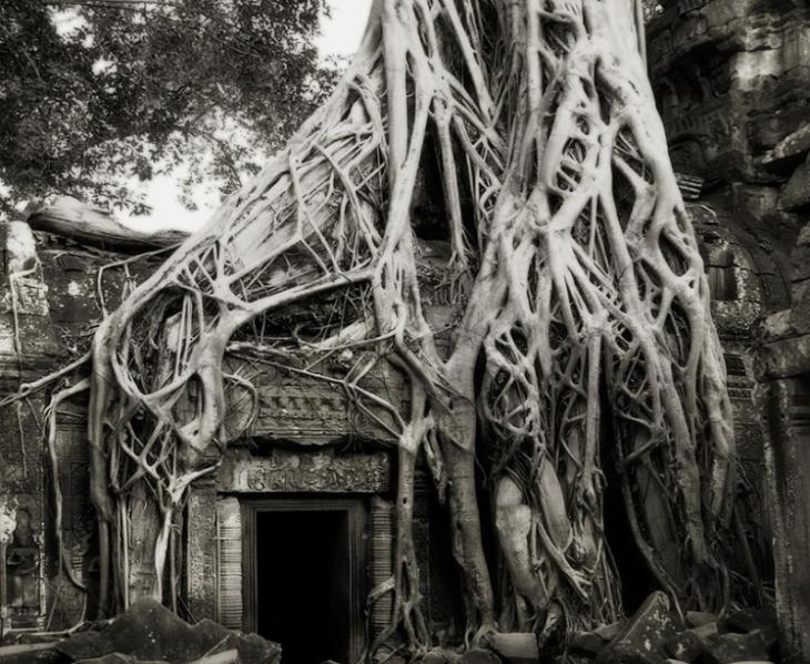 raíz cubre una casa