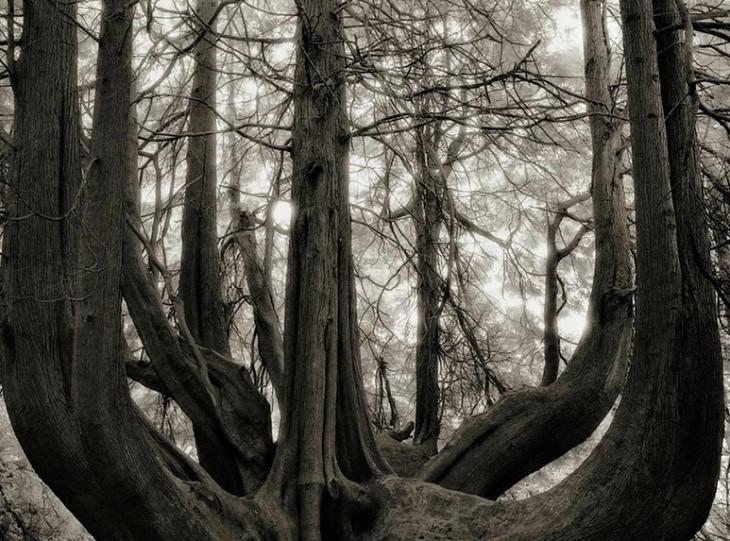 árboles con una raiz grande